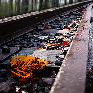 Autumn leaves on a rail track